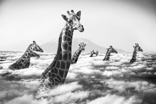 Hakuna Matata - by Thomas Subtil