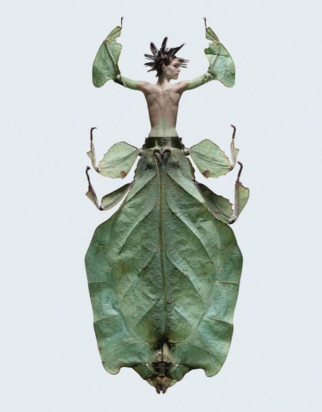 Insectes - photography by Laurent Seroussi